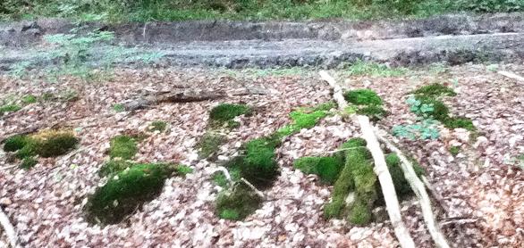 Coupes claires en forêt de Retz