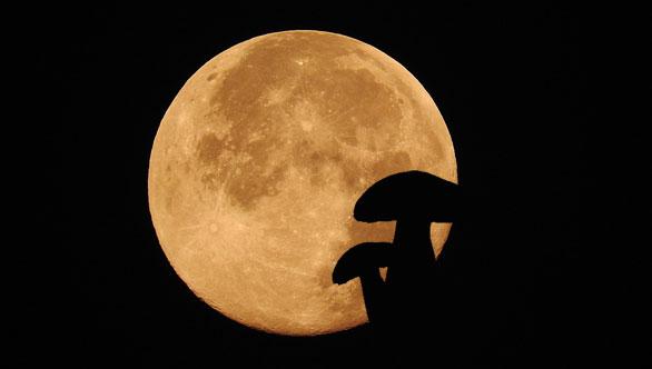 Les Champignons et la lune...