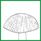 Chapeau Fibrilleux