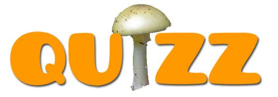 Quizz : Amanite comestible ou mortelle ?