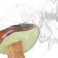 Les champignons génèrent du vent
